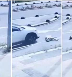 Aracıyla Yol Ortasına Uzanan Köpeğin Üzerinden Geçip Kaçan Akademisyen İçin Suç Duyurusu