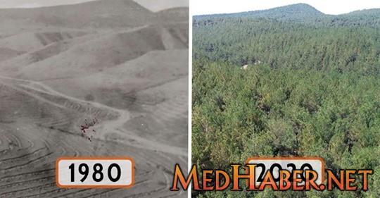 Kupkuru Arazi 40 Yılda Yemyeşil Bir Ormana Dönüştürüldü