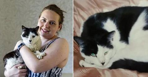 Kediler Er Geç Evin Yolunu Bulur: Evden Kaçtıktan 12 Yıl Sonra Geri Dönen Kedi Gucci