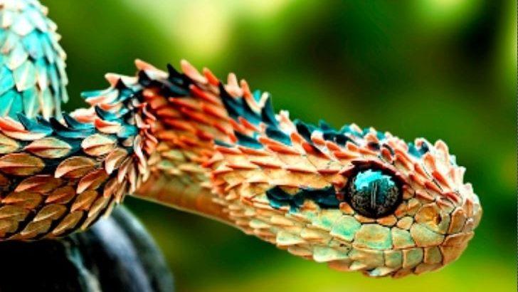 Olağandışı Süper Güçlere Sahip Harika Hayvanlar