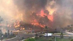 Manavgat'taki yangında çiftliği yanan Tuğba Özay felç geçirdi
